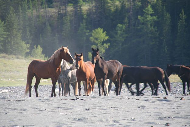 Каньон мустангов Horses